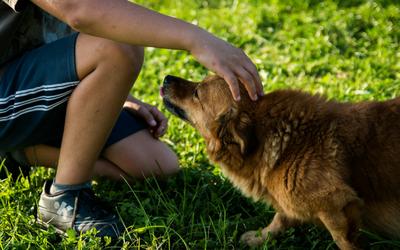 image for Dog Bite Prevention Week