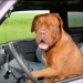 Thumbnail for National Pet Travel Safety Day